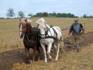 Farmer plowing in Fahrenwalde, Mecklenburg-Vorpommern, Germany.jpg, źródło: Wikimedia Commons