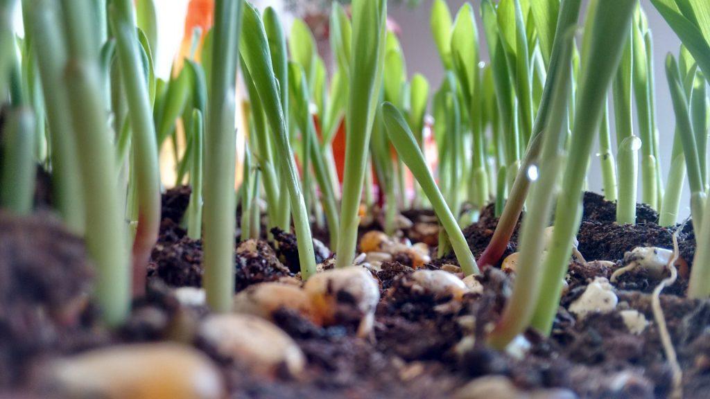 plants-774277_1920