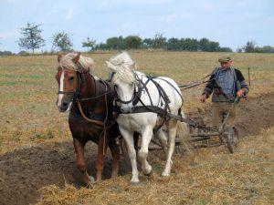 Farmer plowing in Fahrenwalde, Mecklenburg-Vorpommern, Germany.jpg, źródło: Wikimedia Commons
