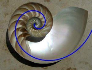 NautilusCutawaySpiral